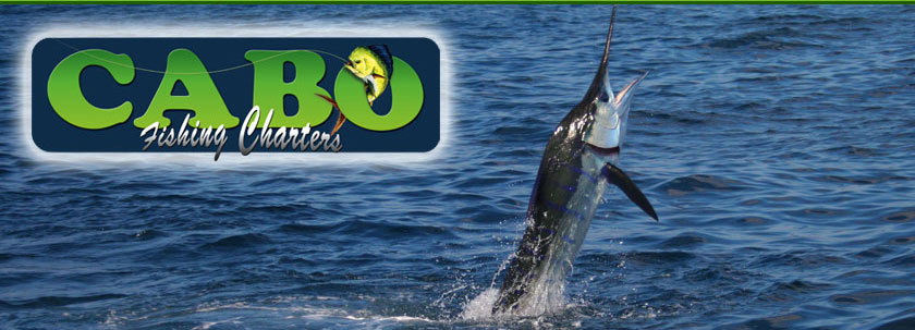 Cabo fishing report and forecast fishing seasons chart for Cabo fishing seasons
